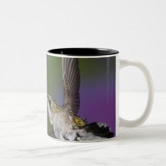 Ruby-throated hummingbird in flight at thistle 2 Two-Tone coffee mug