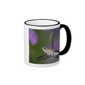 Ruby-throated hummingbird in flight at thistle 2 ringer coffee mug