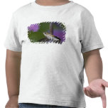 Ruby-throated hummingbird in flight at thistle 2 shirts