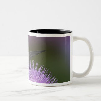 Ruby-throated hummingbird in flight at thistle 3 Two-Tone coffee mug