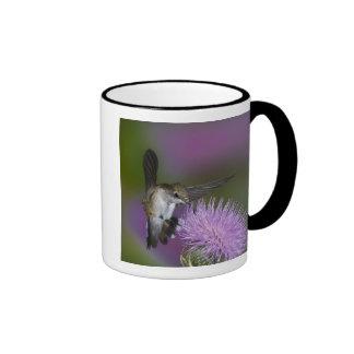 Ruby-throated hummingbird in flight at thistle 3 ringer coffee mug