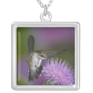 Ruby-throated hummingbird in flight at thistle 3 silver plated necklace