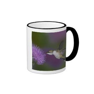 Ruby-throated hummingbird in flight at thistle ringer coffee mug