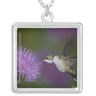 Ruby-throated hummingbird in flight at thistle silver plated necklace