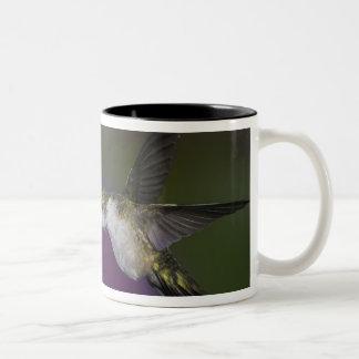 Ruby-throated hummingbird in flight at thistle Two-Tone coffee mug