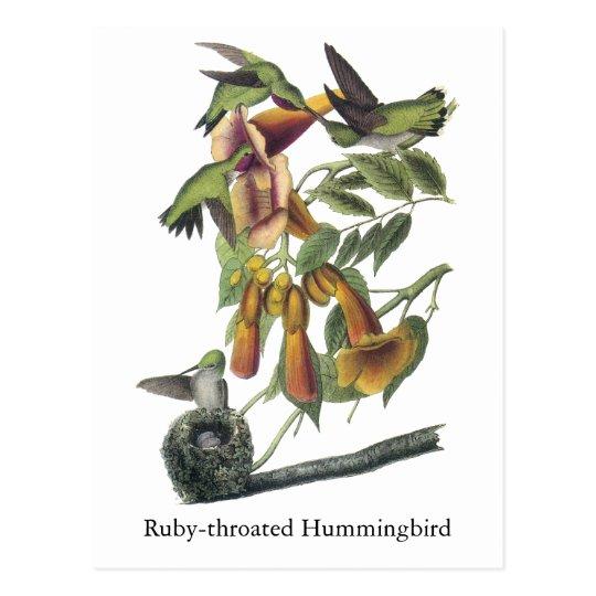 Ruby-throated Hummingbird, John Audubon Postcard