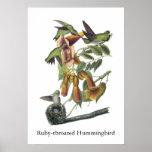Ruby-throated Hummingbird, John Audubon Poster