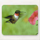 Ruby-throated Hummingbird (male) with petunia Mouse Pad