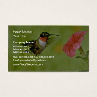 Ruby-throated Hummingbird (male) with petunia Pink Business Card