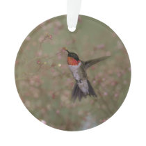 ruby throated hummingbird ornament