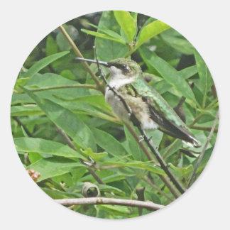 Ruby-Throated Hummingbird Photography Classic Round Sticker
