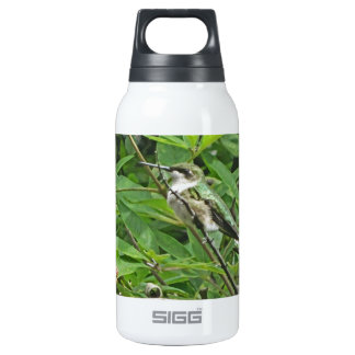 Ruby-Throated Hummingbird Photography Insulated Water Bottle