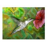 Ruby throated Hummingbird Post Cards