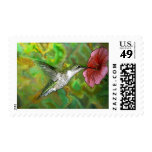 Ruby throated Hummingbird Postage Stamp