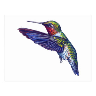 Ruby Throated Hummingbird Postcard
