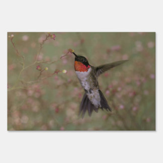 ruby throated hummingbird sign