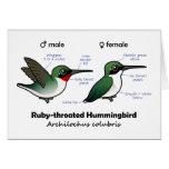 Ruby-throated Hummingbird Statistics Card