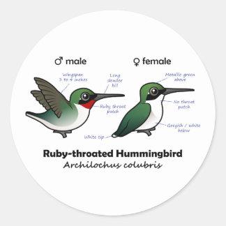 Ruby-throated Hummingbird Statistics Stickers