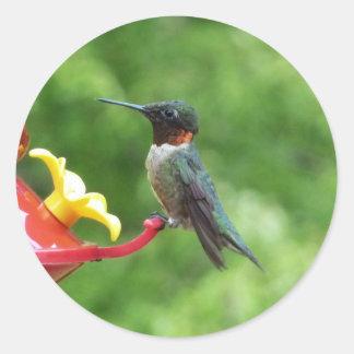 Ruby-Throated Hummingbird Sticker
