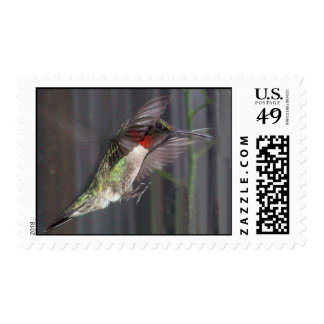Ruby-Throated Hummingbirds 2005_0451a Postage
