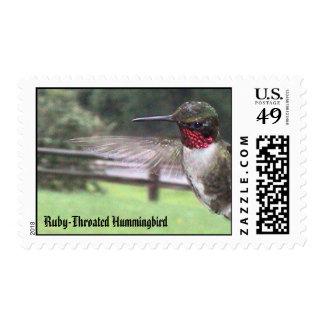 Ruby-Throated Hummingbirds 2005_0638, Ruby-Thro... Postage