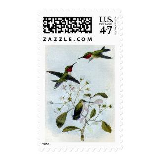 Ruby-throated Hummingbirds Postage