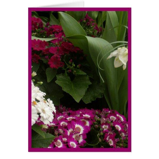 Ruby White Daisies Card