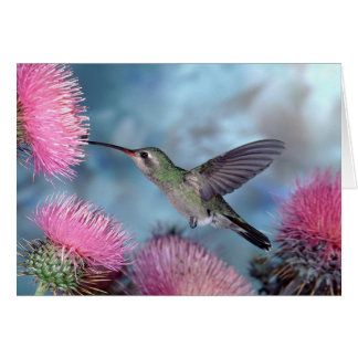 Rubythroat Hummingbird Card