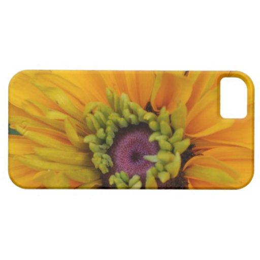 Rudbeckia amarillo de oro iPhone 5 Case-Mate protectores