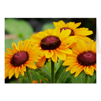 Rudbeckia Blooms Greeting Card