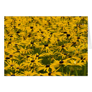 Rudbekia flowers card