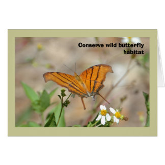 Ruddy Daggerwing butterfly, blank greeting card