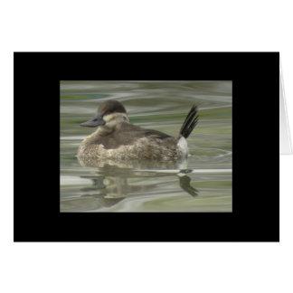 Ruddy Duck Card