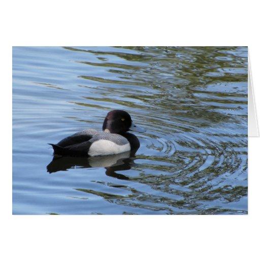 Ruddy Duck in Springtime Card