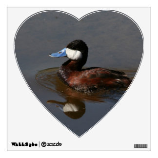 Ruddy Duck Wall Decal