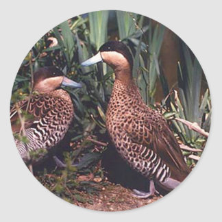 ruddy ducks classic round sticker