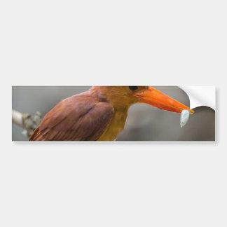 Ruddy Kingfisher Bird National Park Thailand Bumper Sticker