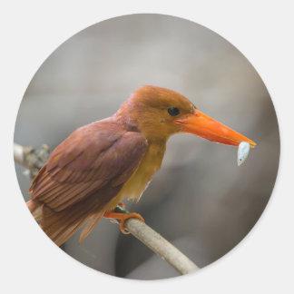 Ruddy Kingfisher Bird National Park Thailand Classic Round Sticker