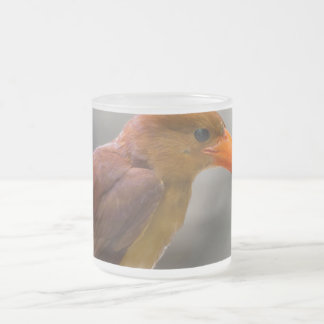 Ruddy Kingfisher Bird National Park Thailand Frosted Glass Coffee Mug