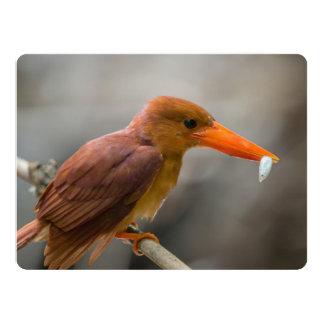 Ruddy Kingfisher Bird National Park Thailand Custom Invitation