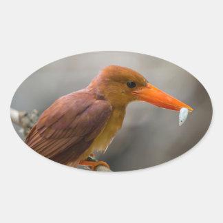 Ruddy Kingfisher Bird National Park Thailand Oval Sticker