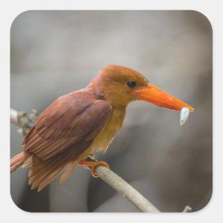 Ruddy Kingfisher Bird National Park Thailand Square Sticker
