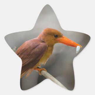 Ruddy Kingfisher Bird National Park Thailand Star Sticker
