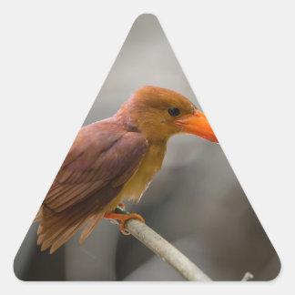 Ruddy Kingfisher Bird National Park Thailand Triangle Sticker