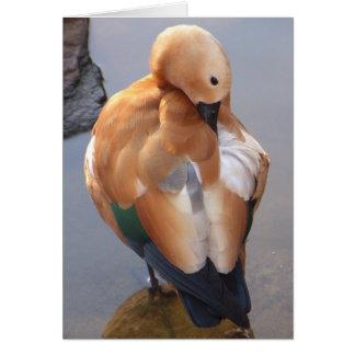 Ruddy Shelduck Duck Card