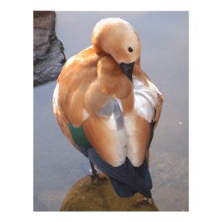 Ruddy Shelduck Duck Letterhead