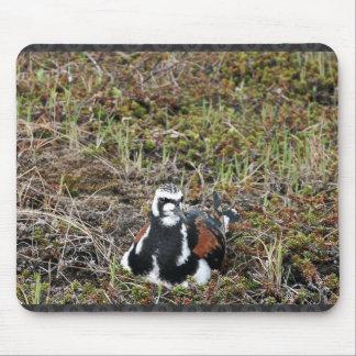 Ruddy Turnstone on Nest Mouse Pad