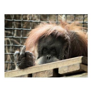 Rude Orangutan Postcard