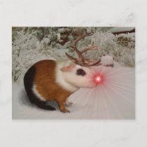 Rudolf the rednosed guinea pig postcard