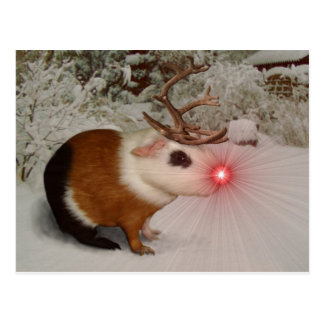 Rudolf the rednosed guinea pig post cards